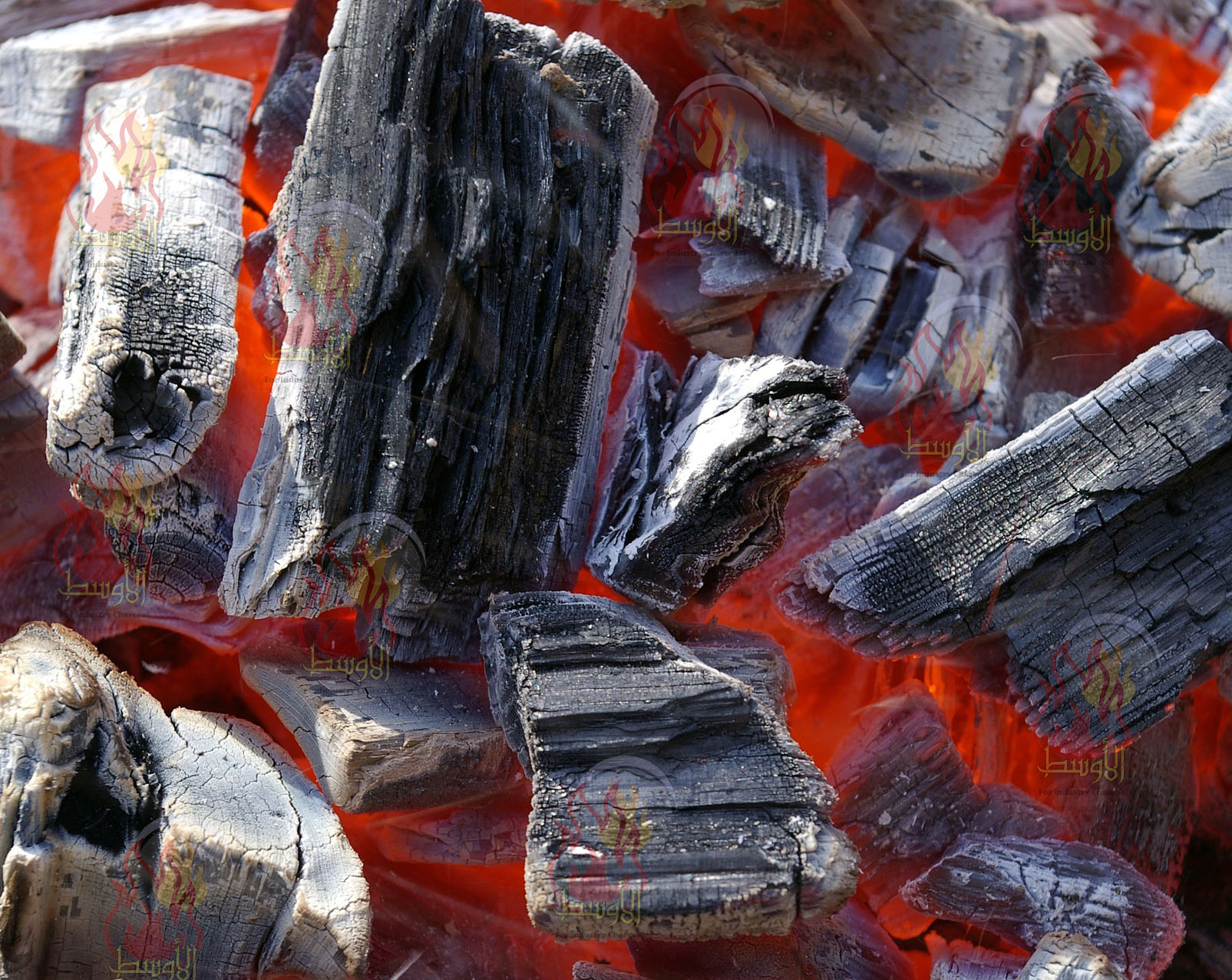 فحم مشاوي,casuarina charcoal